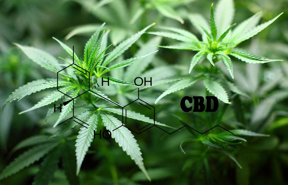 CBD vs Supplements