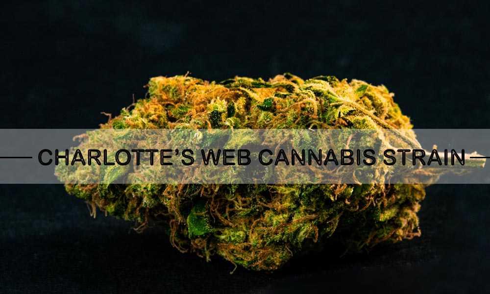 CHARLOTTE'S WEB CANNABIS STRAIN