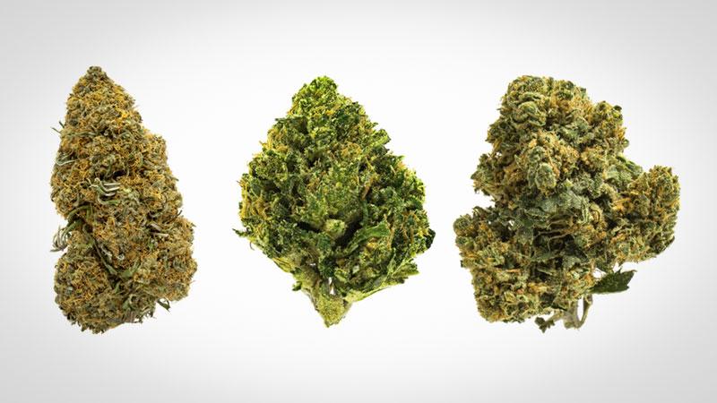 Marijuanaa-Strains