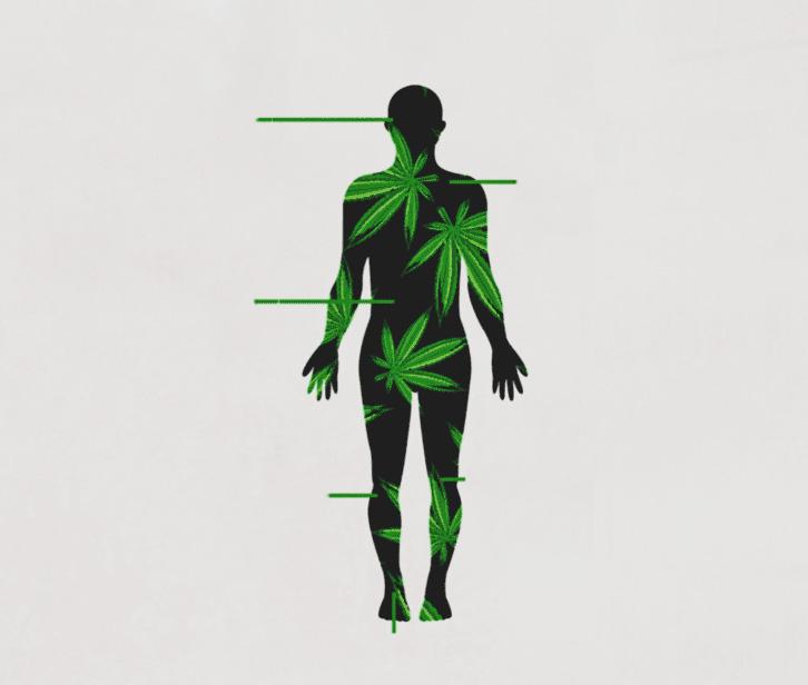 CBD In Body