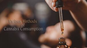 Various Methods of Cannabis Consumption