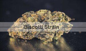 Biscotti Strain